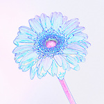 Pink and blue illustration of a gerber daisy