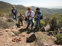 Fellow participants in a herpetological survey document a red diamond rattlesnake.