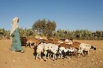 woman with sheep qohaito