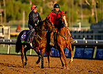 October 30, 2019: Breeders' Cup Mile entrant Trais Fluors, trained by Ken Condon, exercises in preparation for the Breeders' Cup World Championships at Santa Anita Park in Arcadia, California on October 30, 2019. Scott Serio/Eclipse Sportswire/Breeders' Cup/CSM