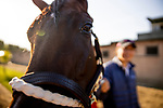 OCT 27: Two Sixty at Santa Anita Park in Arcadia, California on Oct 27, 2019. Evers/Eclipse Sportswire/Breeders' Cup