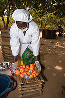 Cashew Farm Worker with a Bowl of Cashew Apples, The Gambia