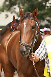 Hungry Island in paddock.  Zagora with Ramon Dominguez win the Grade II Balston Spa for fillies and mares,  3-year & up going 1 1/16 mile on the turf Trainer: Chad Brown. Owner Martin S. Schwartz