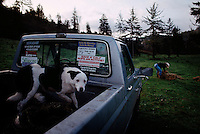 Dog guards a ranchers pick up truck and the bumper stickers as he feeds cows in early morning.