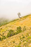 Farmland on Banks Peninsula near Akaroa - East Coast, Canterbury, New Zealand