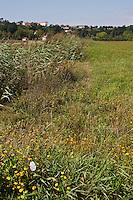Europe/France/Aquitaine/64/Pyrénées-Atlantiques/Pays-Basque/Bayonne: Prairies humides à la Plaine d'Ansot  - La Plaine d'Ansot est une zone naturelle protégée de 100 hectares située aux portes du centre ville de Bayonne.<br /> Elle permet de découvrir la richesse des écosystèmes spécifiques aux zones humides à travers des sentiers pédagogiques à thème : écologie, faune, flore, eau, vie dans les barthes.<br /> Au cœur de la plaine, la Maison des barthes propose information et expositions permanente et temporaire