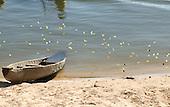 Pará State, Brazil. Aldeia Kokraimoro (Kayapo). River; dugout canoe and butterflies.
