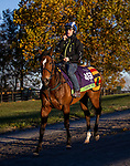 November 4, 2020: Safe Voyage, trained by trainer John Quinn, exercises in preparation for the Breeders' Cup Mile at Keeneland Racetrack in Lexington, Kentucky on November 4, 2020. Alex Evers/Eclipse Sportswire/Breeders Cup