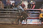 SEBRA - Beckley, WV - 1.17.2015 - Bulls & Action