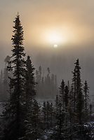 Ice fog obscures the sun over spruce trees around Mosquito Lake on the East end of the UAA Campus.
