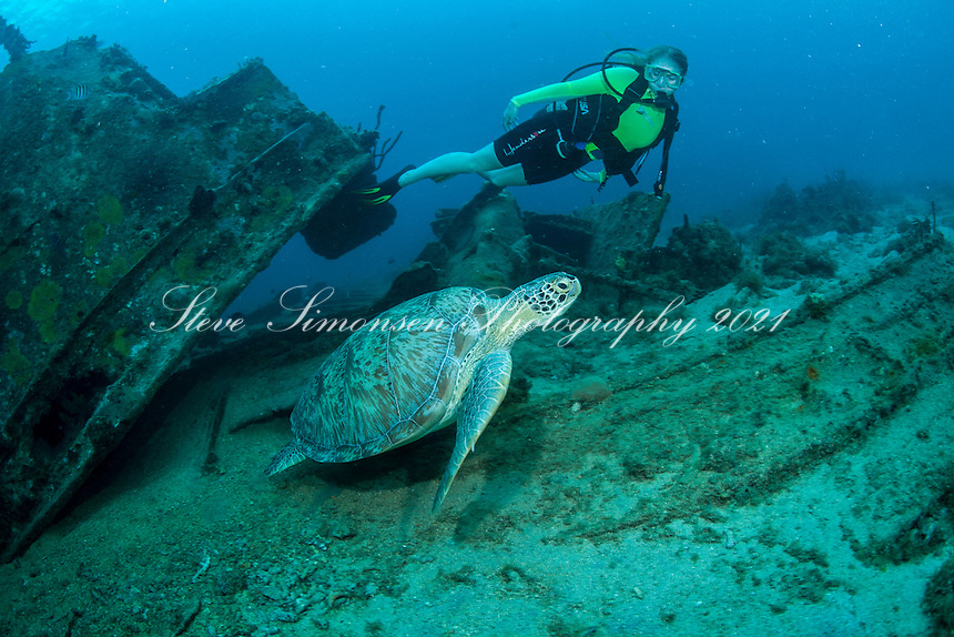 Green Sea Turtle living on <br /> The Wreck of the Cartanser Sr.<br /> St. Thomas<br /> US Virgin Islands