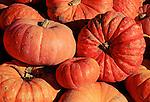 Pumpkins on Green River Valley Farm.