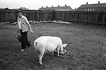 South Kirkby, Yorkshire. 1979<br /> Retired miners Tommy was a bandsman at Hemsworth Colliery, he rents this land from the National Union of Miners. On his smallholding he keeps several pigs.