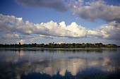Xingu river, Brazil. Forested river bank with puffy white clouds.