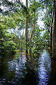 Amazon, Brazil. Trees protruding from the water in flooded forest; Rio Negro, Amazonas State.