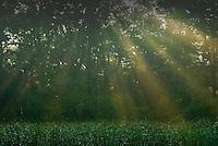 Golden rays of the sun shine through a light fog on a city park.<br />
