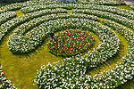 UK WEATHER INPUT - Wednesday 21st April<br /> <br /> Pictured: Horticulturist Rose Philpot  today tends to the labyrinth of daffodils and tulips that have bloomed due to the recent warm weather at Arundel Tulip festival at Arundel Castle in West Sussex.<br /> <br /> Due to the easing of coronavirus restrictions, visitors will now be able to visit the annual festival at the historic walled castle with over 120,000 tulips in bloom. <br /> <br /> There are 130 different varieties of tulip currently on display at the stately home in the heart of West Sussex.<br /> <br /> © Jordan Pettitt/Solent News & Photo Agency<br /> UK +44 (0) 2380 458800