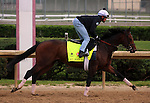 LOUISVILLE, KY - APRIL 20: My Man Sam (Trappe Shot x Lauren Byrd, by Arch) exercises at Churchill Downs, Louisville KY. Owner Sheep Pond Partners, Newport Stables LLC, Jay W. Bligh. Trainer Chad C. Brown.<br />  (Photo by Mary M. Meek/Eclipse Sportswire/Getty Images)