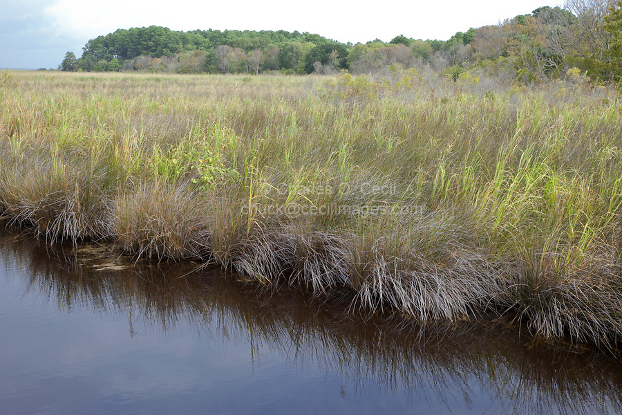 Wetlands Bordering Currituck Sound, North Carolina Outer Banks.