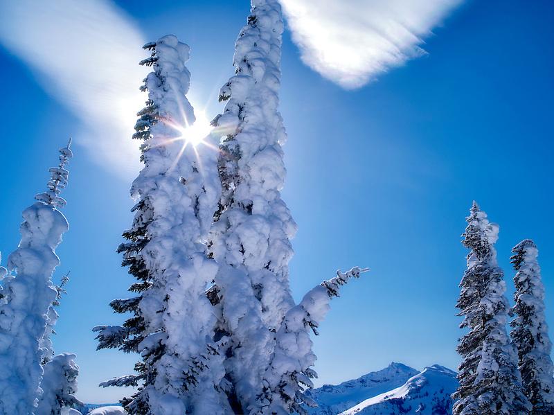 Snow covered trees with sunburst and cloud. Mt. Rainier National Park, Washington