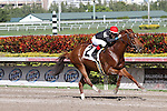 Ragtime (KY) with jockey Dylan Davis on board breaks his maiden for 3 year olds at Gulfstream Park. Hallandale Beach, Florida  02-01-2014