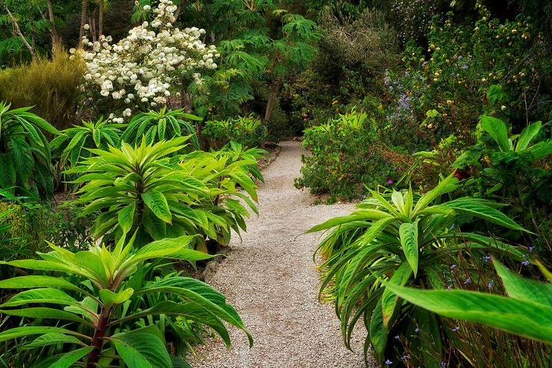 Tulbaghia lined path.Trengwidden Gardens, England, Cornwall