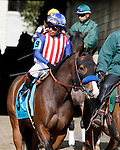 LEXINGTON, KY - APRIL 09: #9 Enchanting Lady coming into the track for the Grade 1 Madison at Keeneland Race Course in Lexington, KY.  April 8, 2016, Lexington, Kentucky. (Photo by Candice Chavez/Eclipse Sportswire/Getty Images)