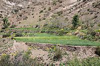 Atlas Mountains, Morocco.  Farmer's Field in Narrow Mountain Valley between Marrakesh and Ouarzazate.