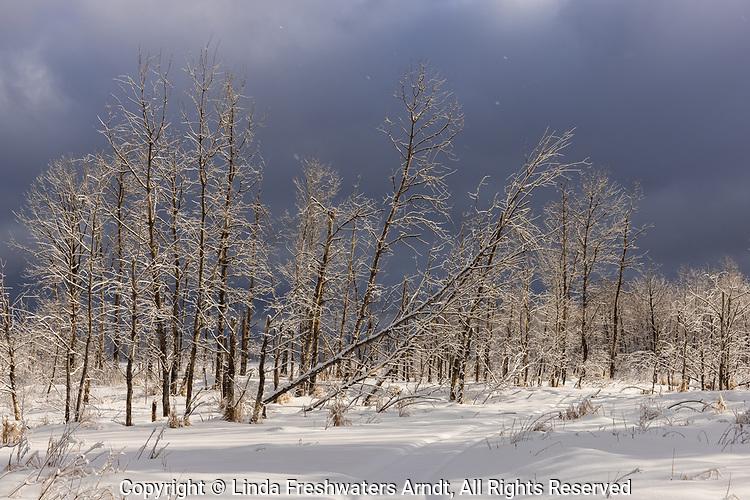Ominous winter landscape in northern Wisconsin.