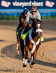 LOUISVILLE, KENTUCKY - APRIL 27: Signalman, trained by Kenneth McPeek, exercises in preparation for the Kentucky Derby at Churchill Downs in Louisville, Kentucky on April 27, 2019. Scott Serio/Eclipse Sportswire/CSM