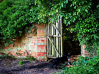BNPS.co.uk (01202) 558833. <br /> Pic: CareySecretGarden/BNPS<br /> <br /> Carey Secret Garden.<br /> <br /> The new owners of a historic country estate have discovered an overgrown secret garden that had lain untouched and forgotten for more than 40 years.<br /> Simon Constantine was astounded when he and his children went off exploring the grounds of Carey House near Wareham, Dorset, and found the 'lost' walled garden behind a padlocked gate.<br /> The 3.5 acre plot was built 140 years ago and would have at one stage served both the estate and the wider community with fresh fruit, vegetables and cut flowers back in the day.