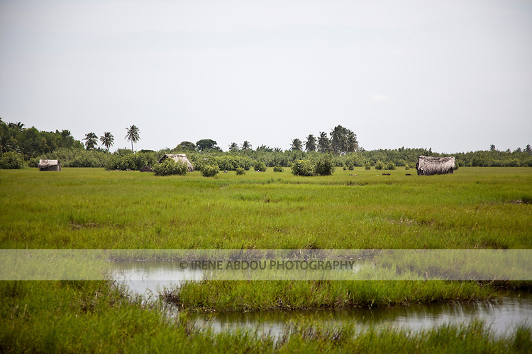 Houses sit amidst the rice fields in Ouidah, Benin.  In the 18th and 19th centuries, this historic town was the center of the Kingdom of Dahomey and hub of the slave trail.