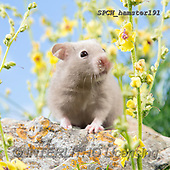 Xavier, ANIMALS, REALISTISCHE TIERE, ANIMALES REALISTICOS, photos+++++,SPCHHAMSTER191,#A#, EVERYDAY ,funny