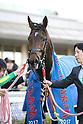 Horse Racing: Challenge Cup at Hanshin Racecourse