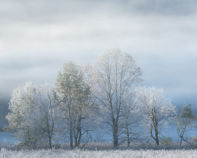 Fall becomes winter as soft light and morning frost accentuates this intimate scene after the season's first snowfall, Smoky Mountains.<br /> Read More: https://www.exploringlight.com/morningmist