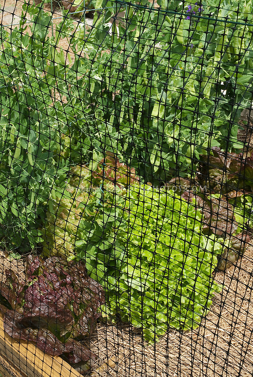 Deer fencing with simple and cheap plastic mesh netting fence for vegetable garden to deter animal pests