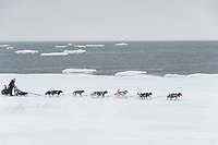 Jessie Royer runs on the sea ice with open water and icebergs in the backgroud as she makes her way toward the Nome finish line to place 3rd in the 2019 Iditarod sled dog race.<br /> <br /> Photo by Jeff Schultz/  (C) 2019  ALL RIGHTS RESERVED