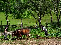 Pflügen mit Ochsen, beim Goderdzi-Pass an der Straße nach Batumi, Adscharien - Atschara, Georgien, Europa<br /> ploughing with ox near Goderzi pass, Adjara,  Georgia, Europe