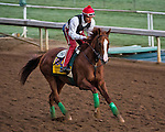 October 29, 2014:  California Chrome, trained by Art Sherman, exercises in preparation for the Breeders' Cup Classic at Santa Anita Race Course in Arcadia, California on October 29, 2014. Scott Serio/ESW/CSM