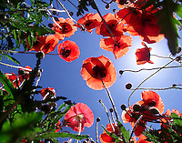 Wildflowers from below in Albemarle County, VA. (photo..Andrew Shurtleff)