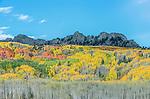US, CO, Gunnison NF, Autumn Color at Kebler Pass