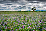 This landscape image was taken just west of Willow Tree in the magnificent New England region of New South Wales in Australia.