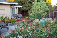 Shrub roses defining patio space in small space backyard California Garden, Lundstrom Garden, design by Susan Morrison