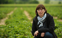 Wie beeinträchtigt der starke Regen Sachsens Obst- und Gemüsebauern ? - im Bild: Undine Lehmann (54) und ihr Erdbeerfeld in Rückmarsdorf.  Foto: Norman Rembarz