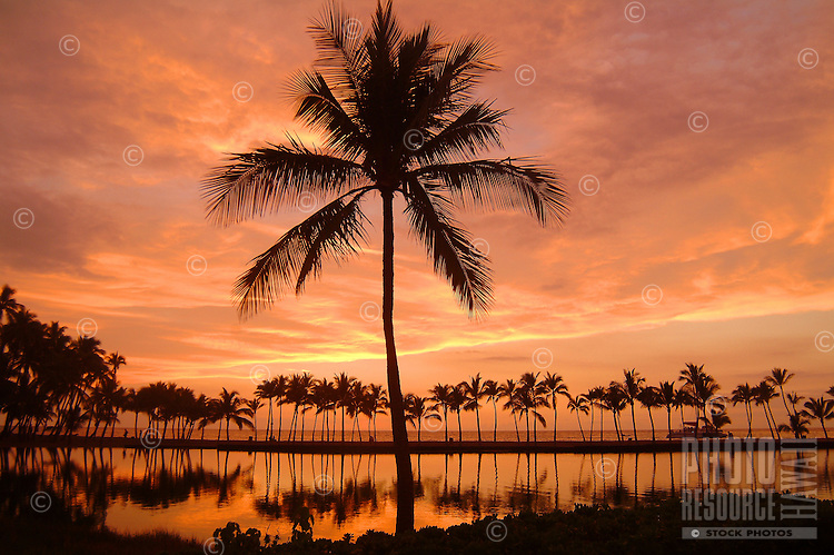 Near Anaeho'omalu Bay on the Big Island, an ancient Hawaiian royal fishpond reflects a magnificent sunset and palm trees.