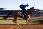 November 4, 2020: Dunbar Road, trained by trainer Chad C. Brown, exercises in preparation for the Breeders' Cup Distaff at Keeneland Racetrack in Lexington, Kentucky on November 4, 2020. Gabriella Audi/Eclipse Sportswire/Breeder's Cup/CSM