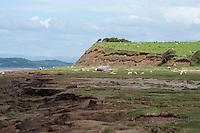 Erosion of coastal land, Bolton le Sands, Morecambe Bay, Lancashire.