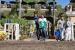 AUG 9,2014:Tonito M. appears at the paddock in La Jolla Handicap at Del Mar Race Track in Del Mar,CA. Kazushi Ishida/ESW/CSM