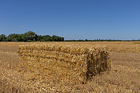 17-7-2021 Bale of barley straw in Lincolnshire <br /> ©Tim Scrivener Photographer 07850 303986<br />      ....Covering Agriculture In The UK....
