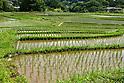 Planting season in largest terraced rice-fields in Saitama, Japan